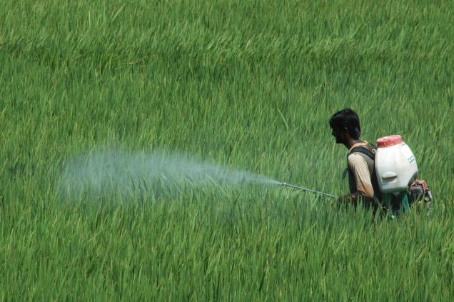 Do Chemical Fertilizers affect Nervous System to drive people towards Suicides?